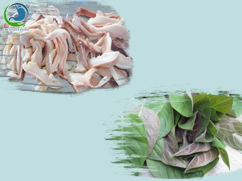 Kết hợp lá mơ lông và dạ dày lợn chữa trào ngược dạ dày